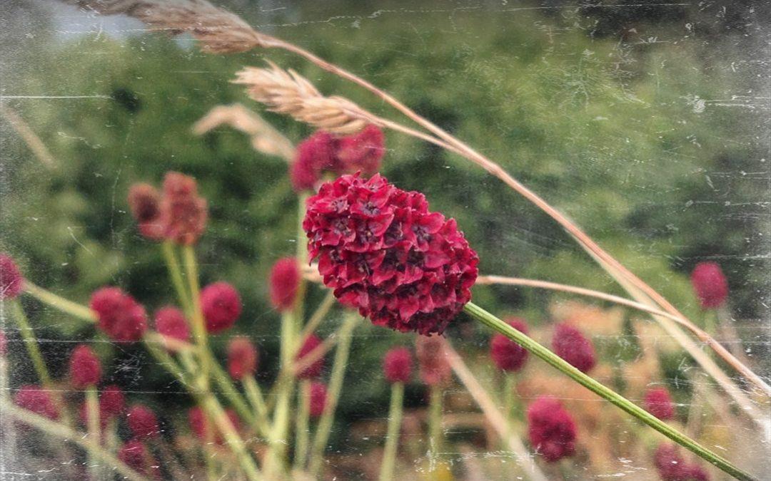 8 zapomnianych polskich roślin